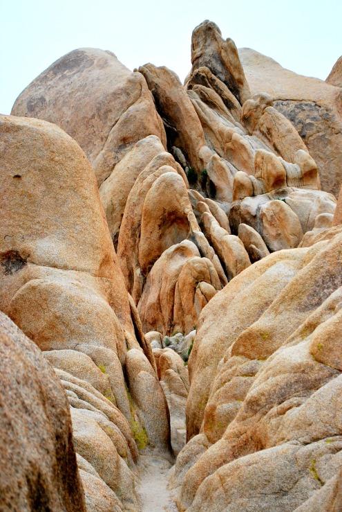 Joshua Tree Nationalpark