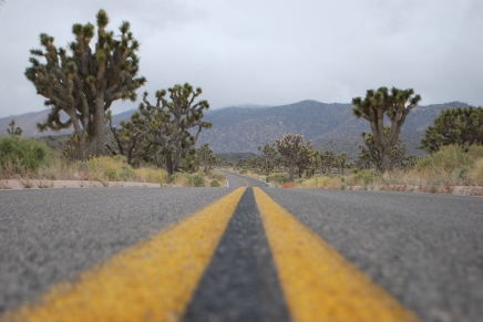 Road in Joshua Tree Nationalpark